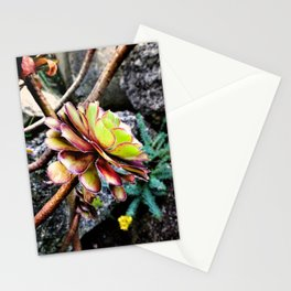 Summer Succluent Stationery Cards