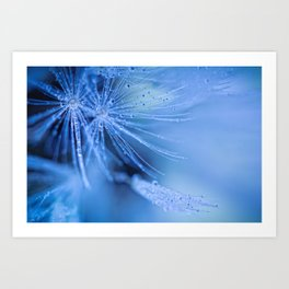 Dandelion fluff Art Print
