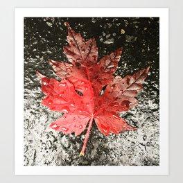 Fall in Asheville Art Print