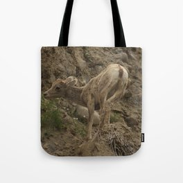 Baby Mountain Goat in Yellowstone National Park, WY Tote Bag