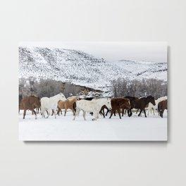 Carol Highsmith - Wild Horses Metal Print