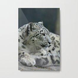 Snow leopard 2018 Metal Print