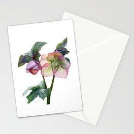 Hellebore - Helleborus orientalis Stationery Cards
