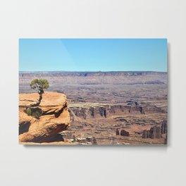 Solitary Juniper Tree, Dead Horse State Park Metal Print