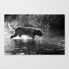 Brown Roan Italian Spinone Dog in Action Canvas Print