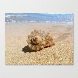 whelk on the beach Canvas Print
