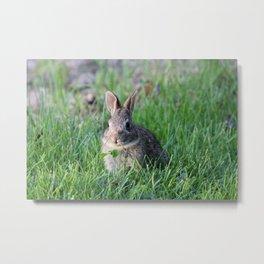 Bunny 4 Metal Print