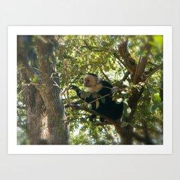 Capuchin Contemplation Art Print