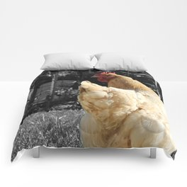 Another Dramatic Chicken Comforters