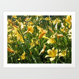 Moutain Flowers Art Print