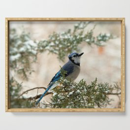 Look to the Sky (Blue Jay) Serving Tray
