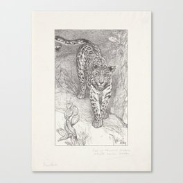 Leopard, Wegner & Mottu, after August Allebé, 1880 Canvas Print