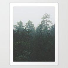 Pine Trees through the Mist Art Print