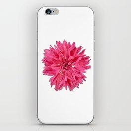 Pink Cornflower iPhone Skin