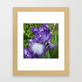 The Iris of Your Purple Eye Framed Art Print