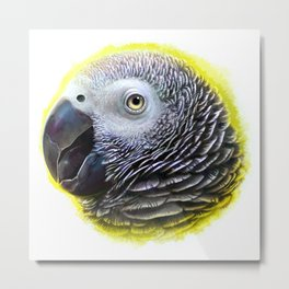 African grey parrot realistic painting Metal Print