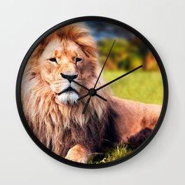 Majestically Marvelous Adult Male African Lion Relaxing On Meadow Close Up Ultra HD Wall Clock
