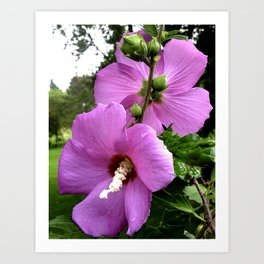 Hibiscus Flowers Back To Back Art Print