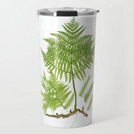 Pteridium aquilinum  byThomas Moore Travel Mug