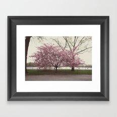 in bloom::nyc Framed Art Print
