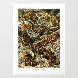 Ernst Haeckel Lacertilia 1904 Poster Art Print