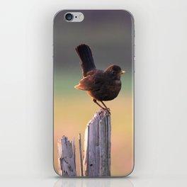 Blackbird on a Wooden Post iPhone Skin