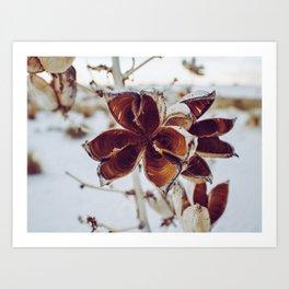 White Orange Flower Art Print