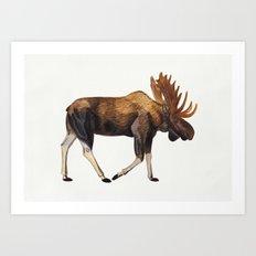 Watercolour Moose Drawing Art Print