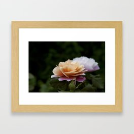 Lily Pad Rose Framed Art Print