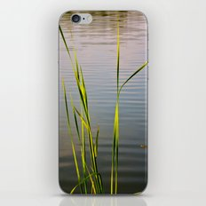 Evening Reeds iPhone & iPod Skin