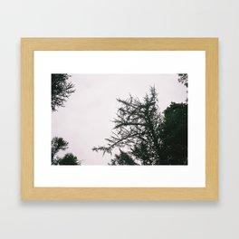 P_06 Framed Art Print