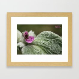 Tiny Worlds Series: Lambs Ear  Framed Art Print