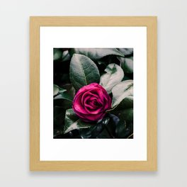Purple Camellia Framed Art Print