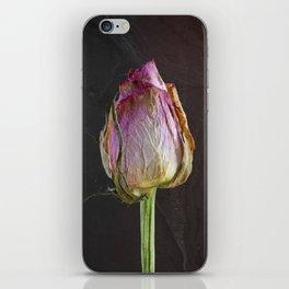 Old Rose on Slate iPhone Skin
