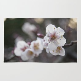 The Early Cherry Blossom Rug