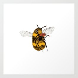 Bee tries Violin Art Print