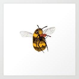 Bee tries Violin Art Print