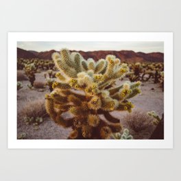 Cholla Cactus Garden XIV Art Print