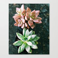 plants Canvas Prints featuring Plants by Yellow Barn Studio