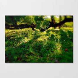 Esoteria Canvas Print