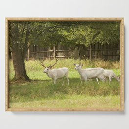 Leucistic deer herd Serving Tray