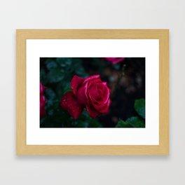 Roses and Raindrops: Magenta Framed Art Print