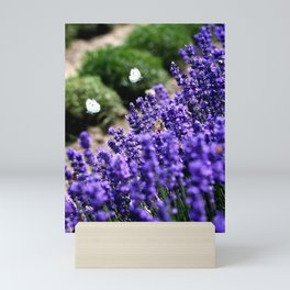 Lavender Love Mini Art Print
