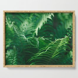 Macro photography of a fern in a tropical forest. Nature background. Serving Tray