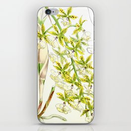A orchid plant - Vintage illustration iPhone Skin