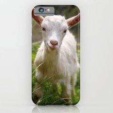 Baby goat iPhone 6 Slim Case
