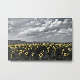 Sunflowers of Tuscany Metal Print