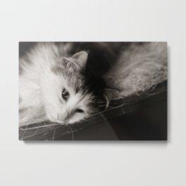 Cat domestic close up portrait image Metal Print