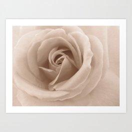 Rose in sepia Art Print