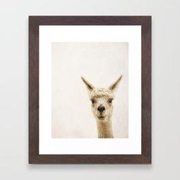 Alpaca Portrait Framed Art Print